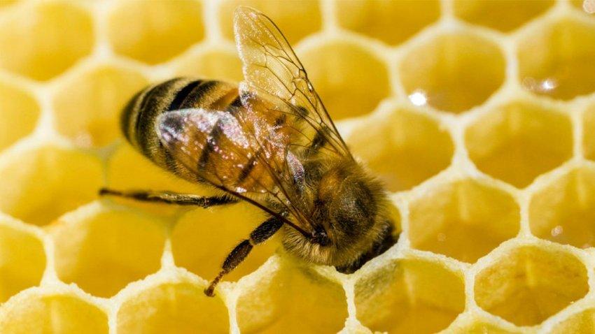 Οι μέλισσες κατανοούν μια αρκετά περίπλοκη μαθηματική έννοια